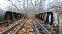 Trestle Autumn
