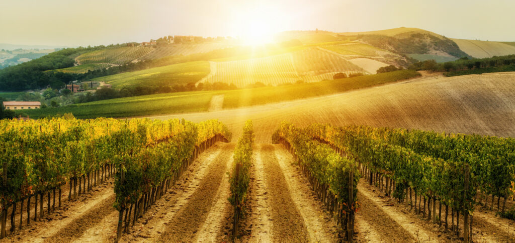 Capalino Partners with New York Wine & Grape Foundation to Advance Sustainability in New York